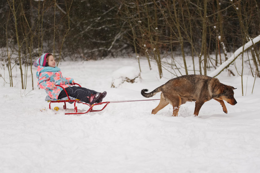 Winter Sports to do With Your Dog