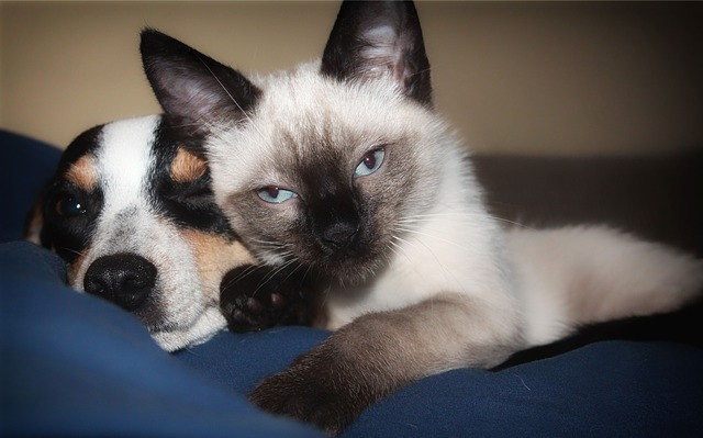 How to Introduce a New Puppy to Your Cat