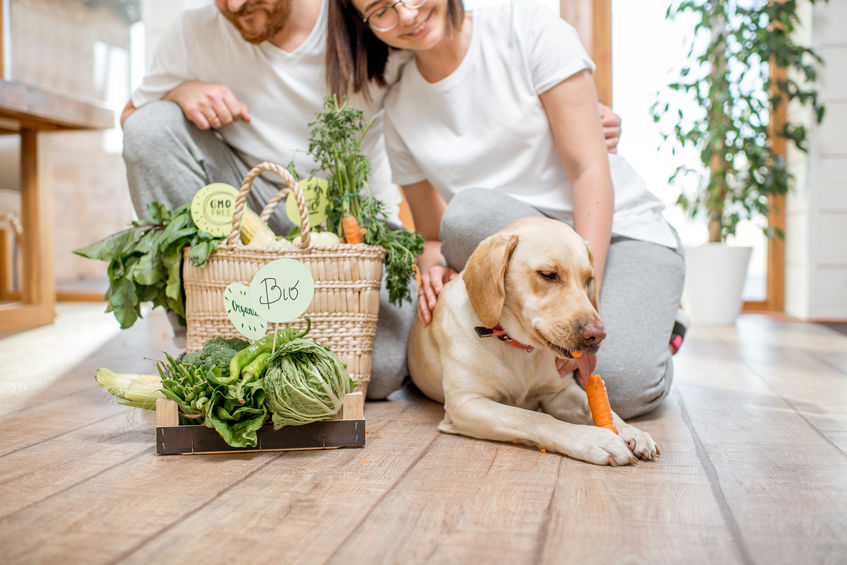8 People Foods That Are Good for Your Dog