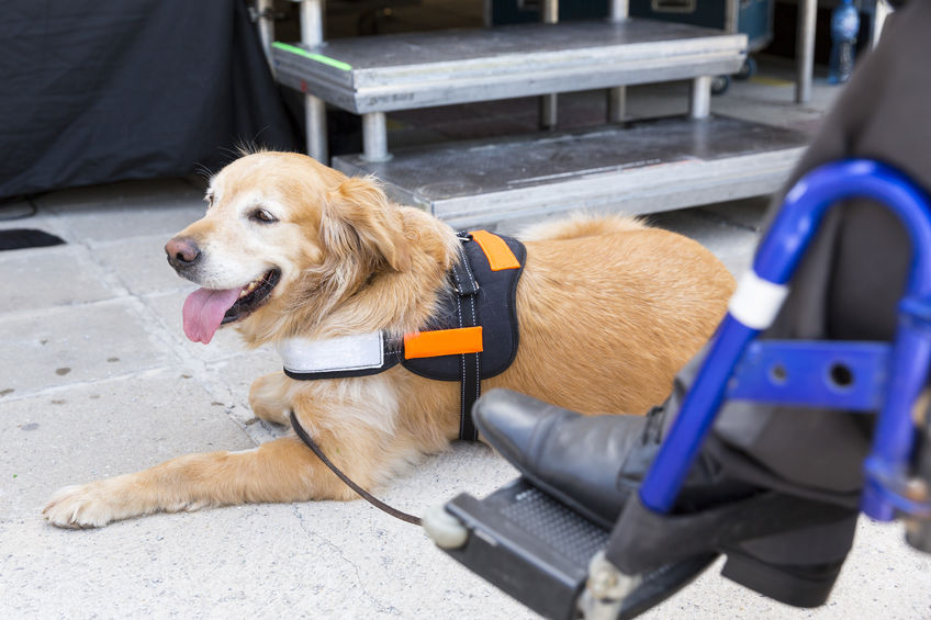 Making Your Dog a Service Dog