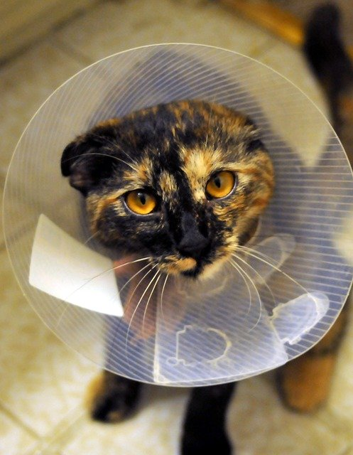 The Importance of Spaying and Neutering