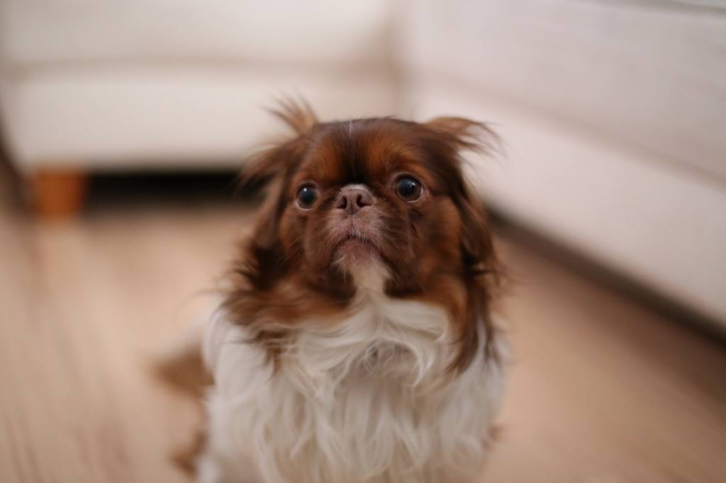 Treating Dog Constipation