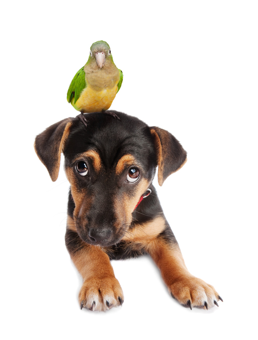 Do Dogs and Birds Get Along?