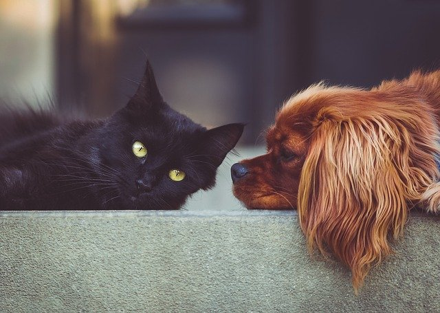 7 Activities Your Dog and Cat Can do Together