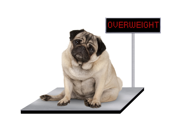 Methods of Weight Control in Dogs