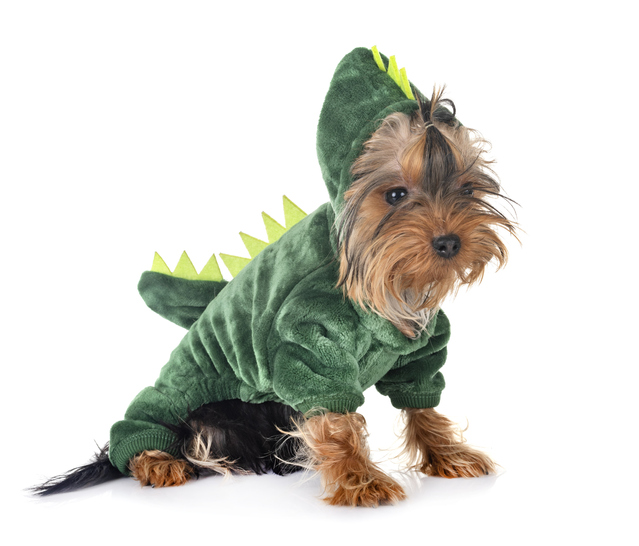 7 Halloween Costume Ideas for Your Dog in 2020