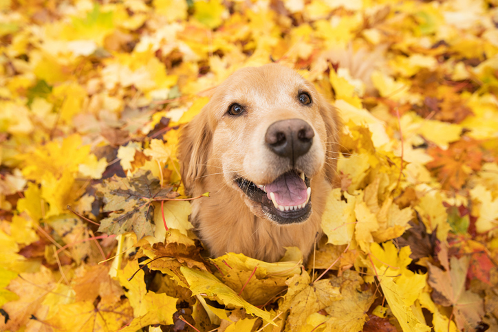 7 Ways to Celebrate Fall with Your Fur Baby