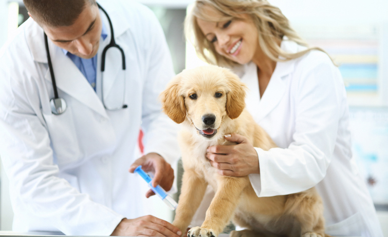 Where Can Dogs Get Kennel Cough?