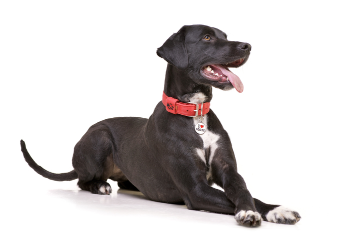 Why are Dog Collars Important?