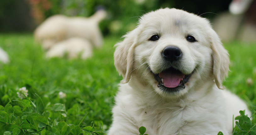 A Puppy's Life: The First Month