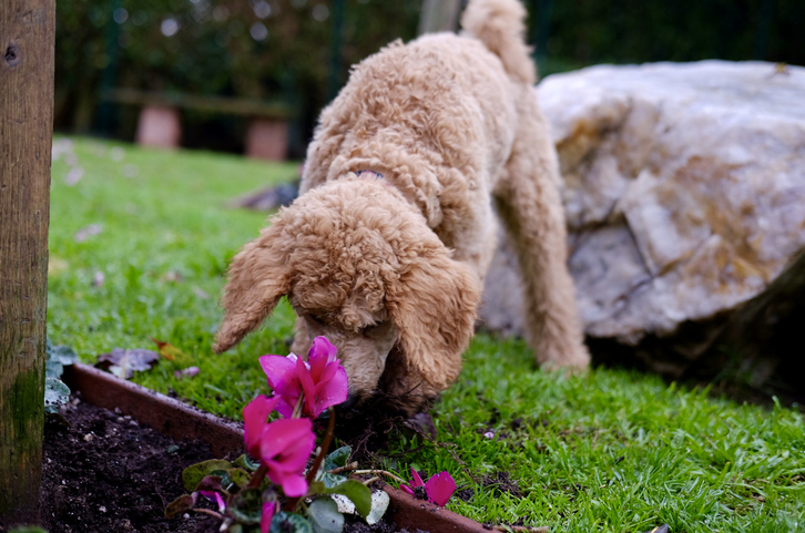 How to Keep Your Dog from Digging in the Garden