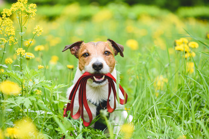 Celebrating Spring with Your Dog