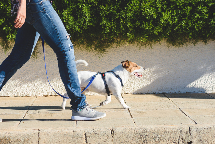 5 Ways to Safely Socialize Your Dog with Humans