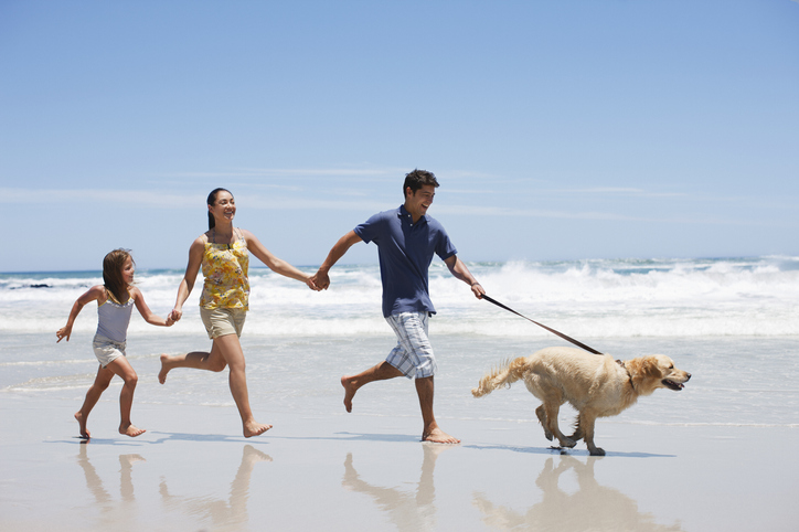 10 Fun Summer Activities to Do with Your Dog