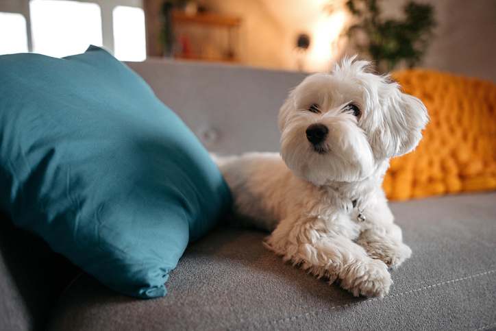 The Great Debate: Should I Let My Dog on the Couch?