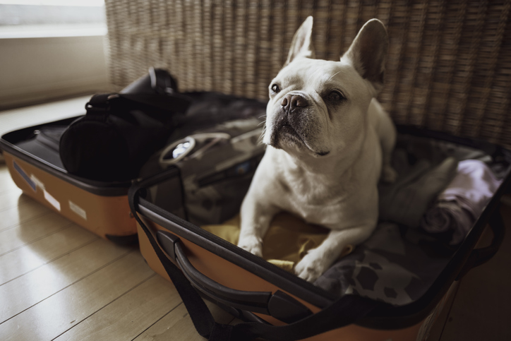 2021 Checklist for Taking Your Dog on Vacation