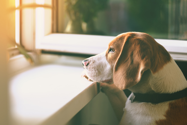 Do Dogs Get Lonely?