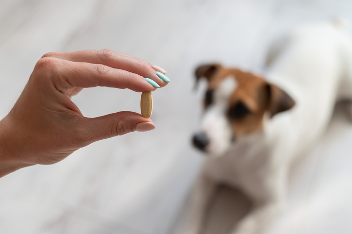 Giving Your Dog Medication